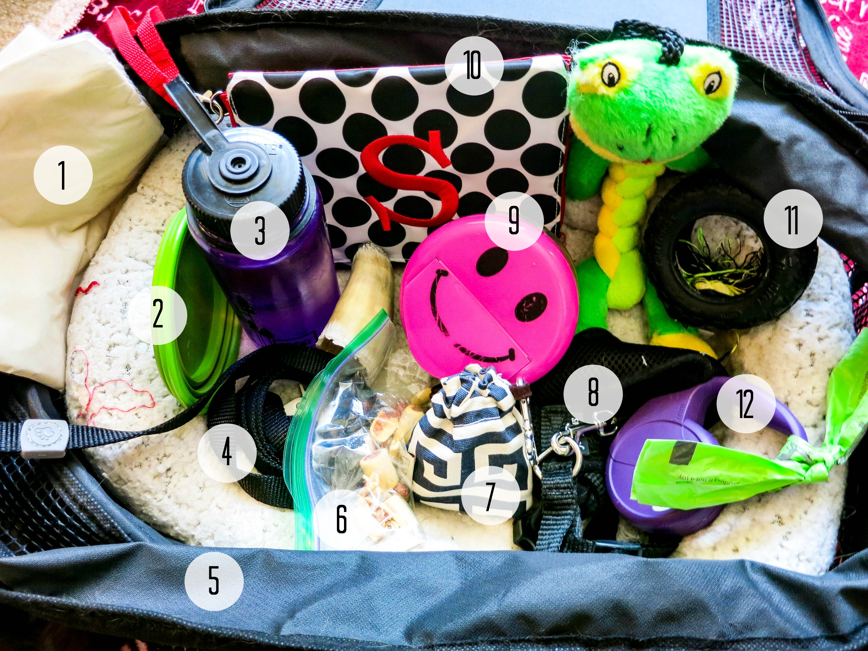 Supplies for flying with pet