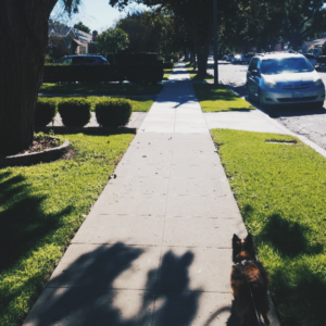 Dog on a leash in a neighborhood with trees