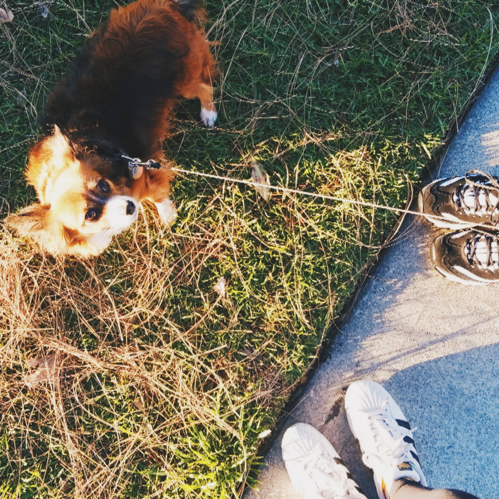 A cute dog on a leash with two pairs of shoes in frame