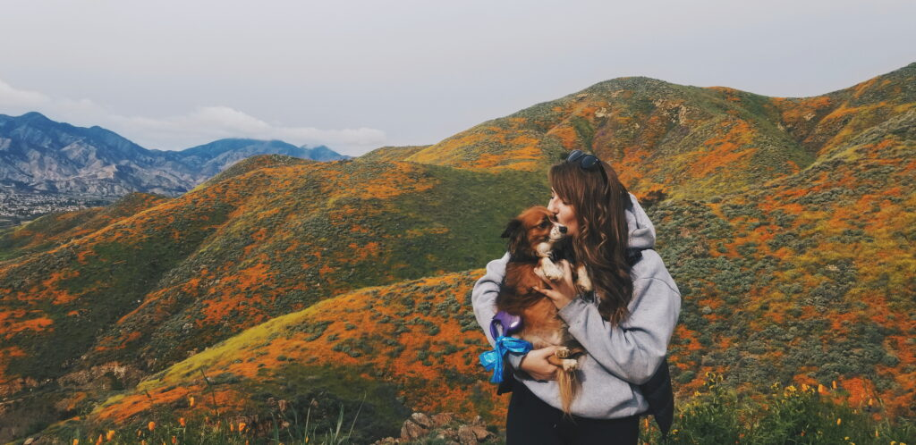 A girl kissing her dog with field of wildflowers in the background